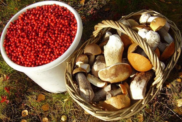 Карелия грибы и ягоды