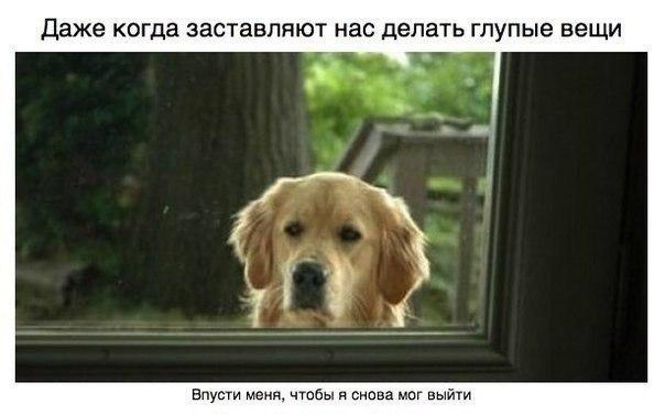 фото собак с подписями