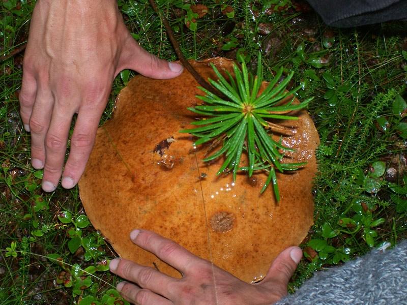 Отдых в Карелии грибы, ягоды