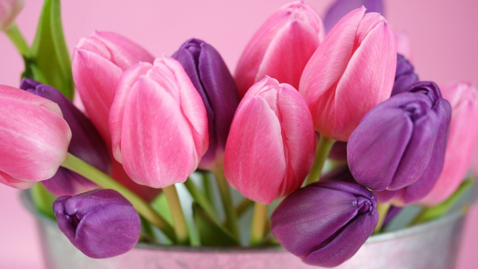 красивый букет тюльпанов