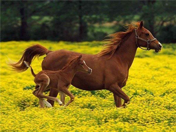 самое красивое фото лошади