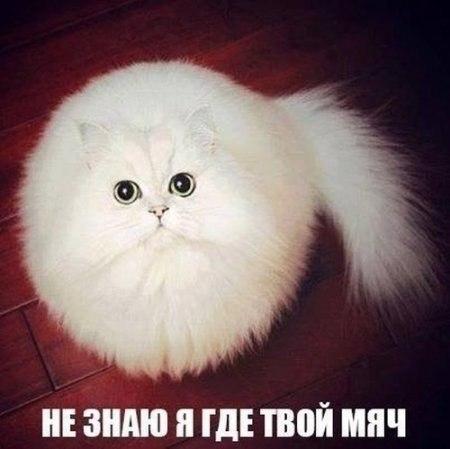 смешные фото кошек