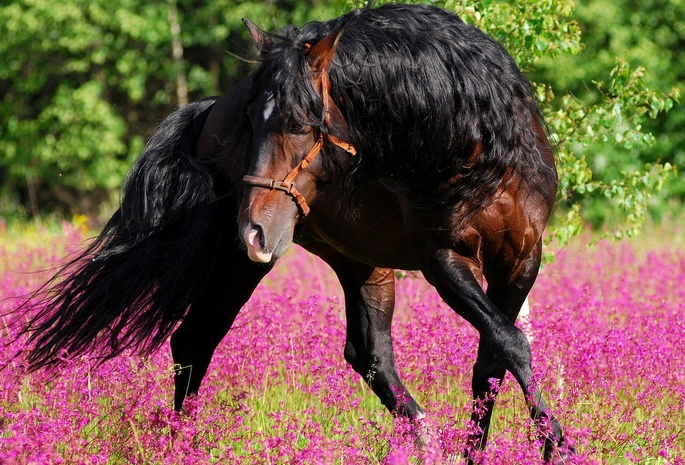 красивое фото лошадь танцует