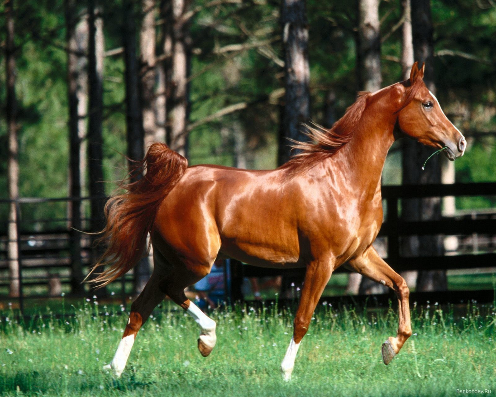 Картинки лошадей красивые