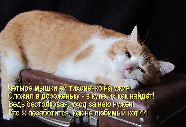 смешные фото котов
