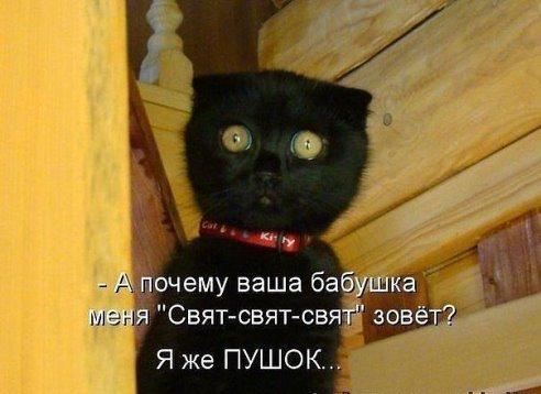 смешные фото кошек и котов