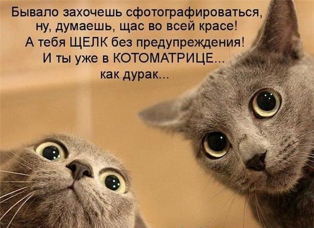 смешные фото кошек и котят