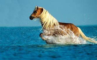 самые красивые лошади фото