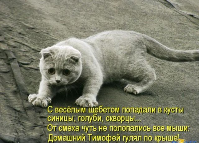 http://lisimnik.ru/wp-content/uploads/2014/10/uS95-fvWCY4-e1416163183611.jpg