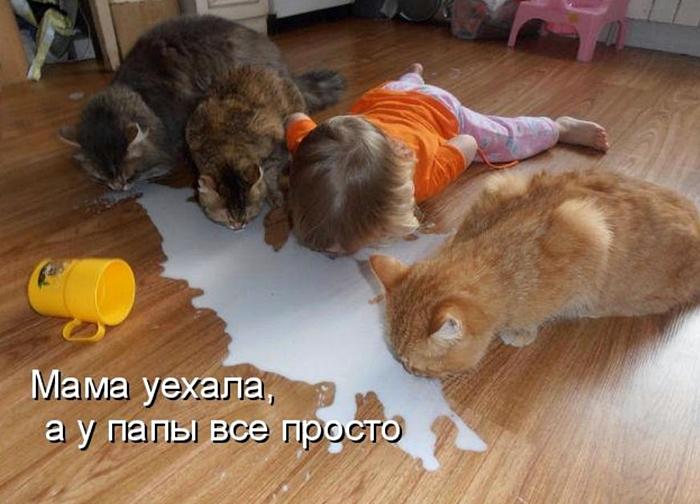 смешные котята и дети