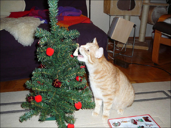 смешные кошки и ёлка фото