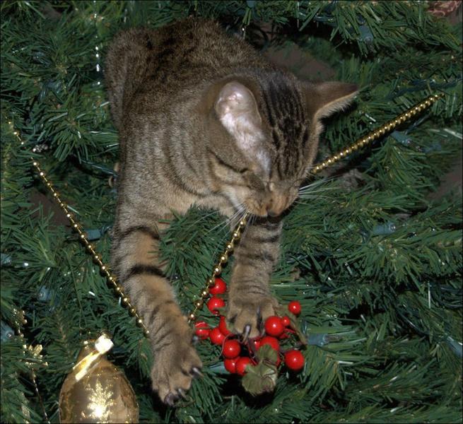 приколы +про кошек самые смешные