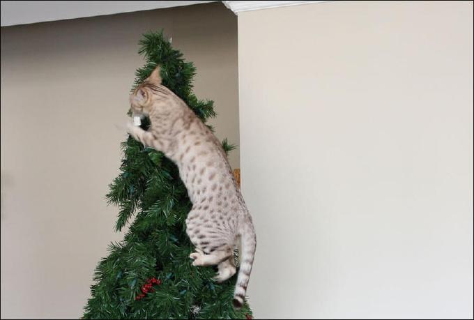 забавные приколы с кошками