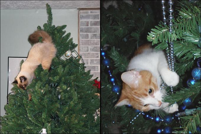 смешные котята и елка фото