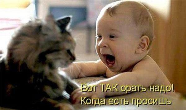 малыш и кот
