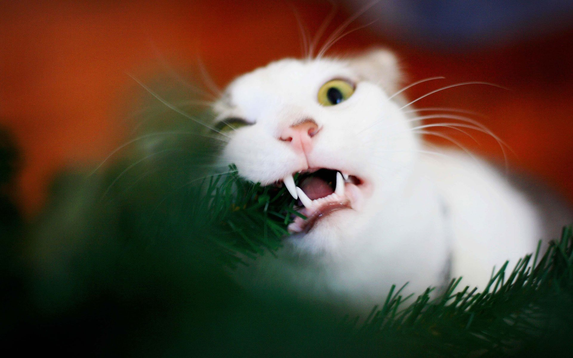 кот наряжает елку