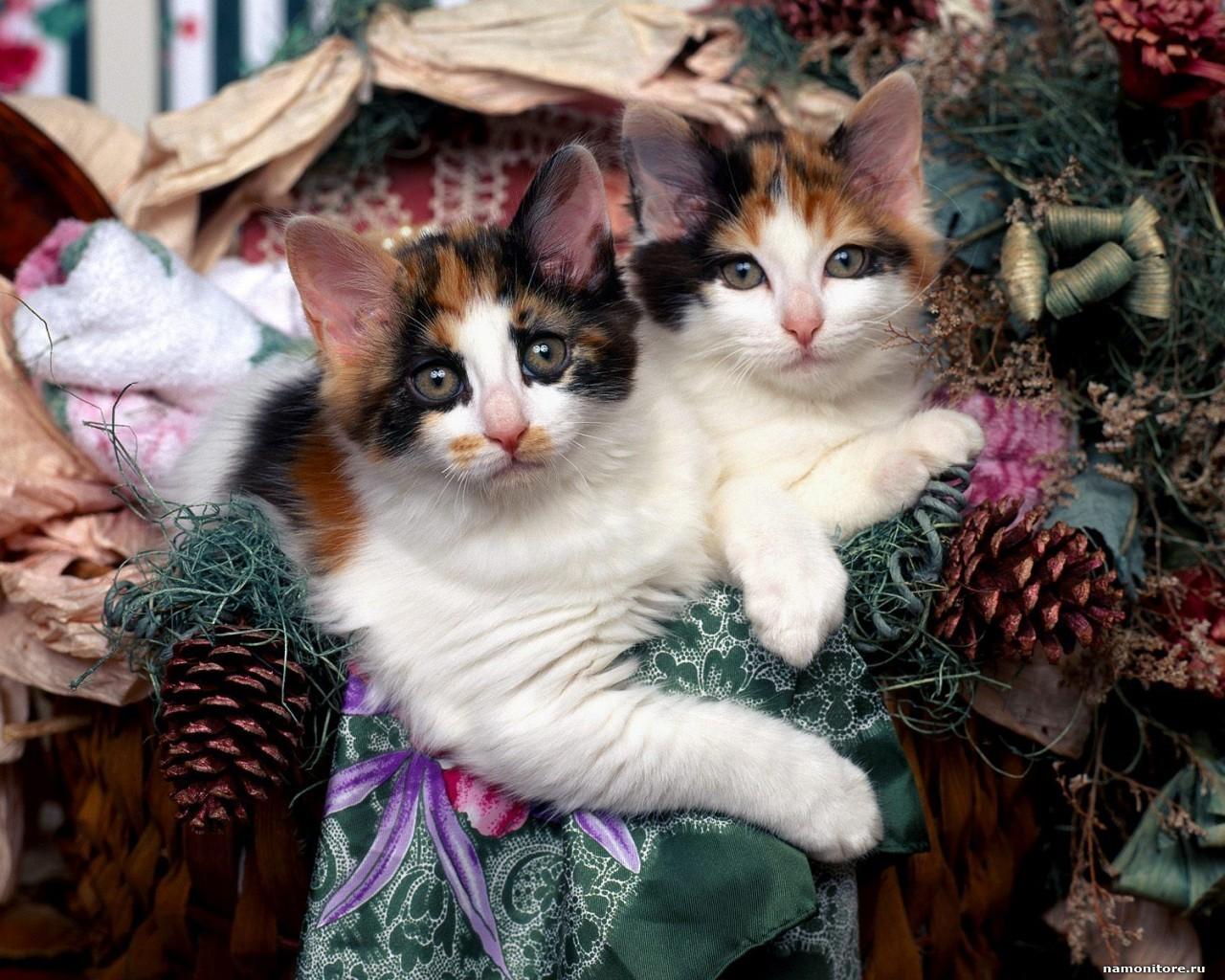 смешные коты кошки +и котята