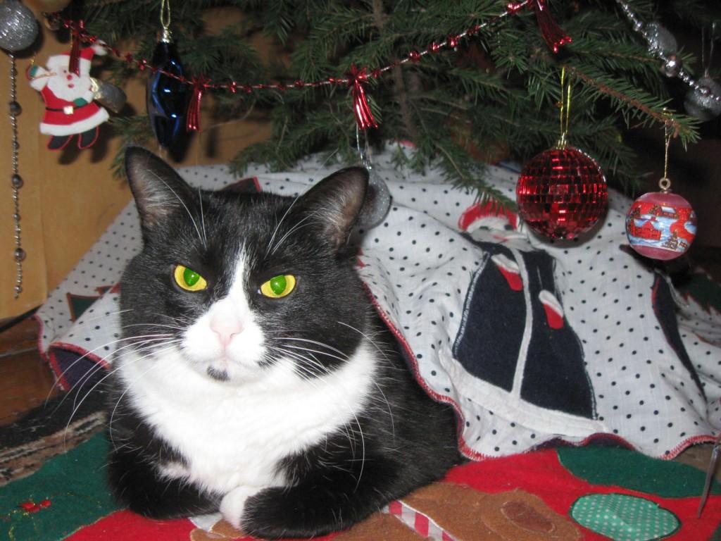 кот и ёлка фото