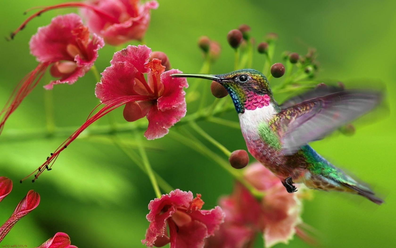птица колибри фото