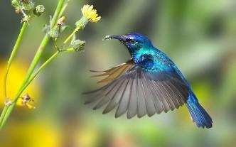 колибри и цветок