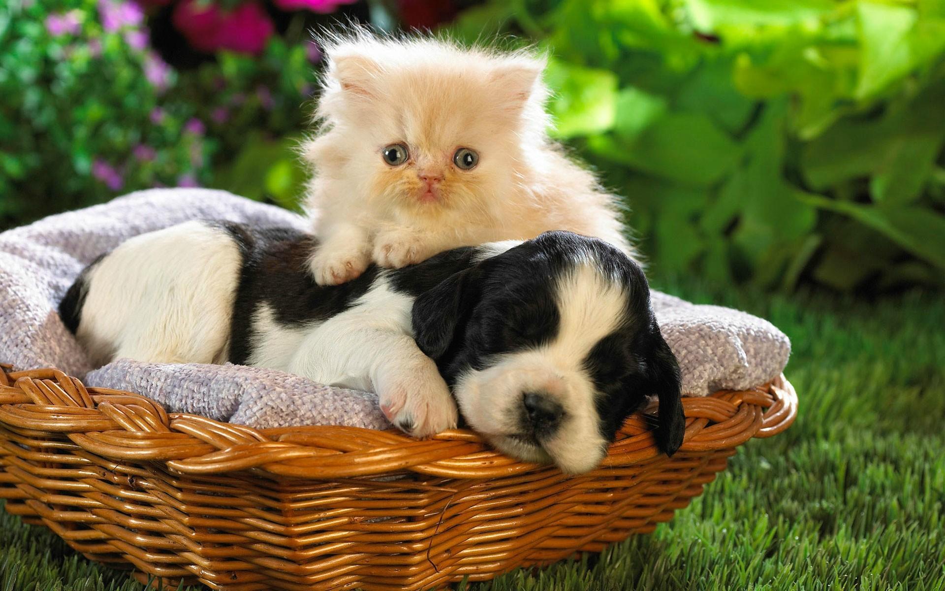 Кот в собака и котята