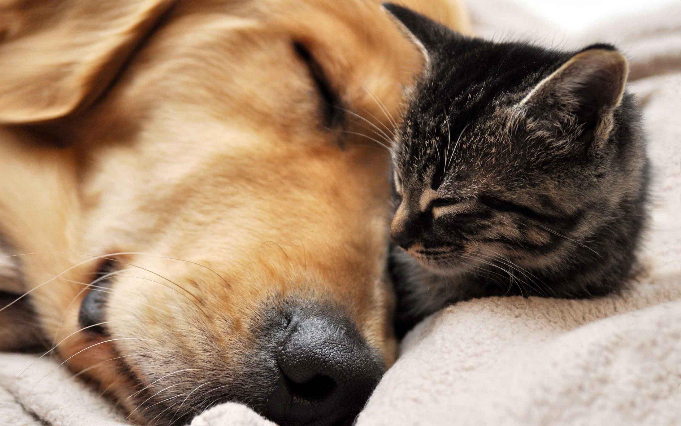 Кошка и собака друзья