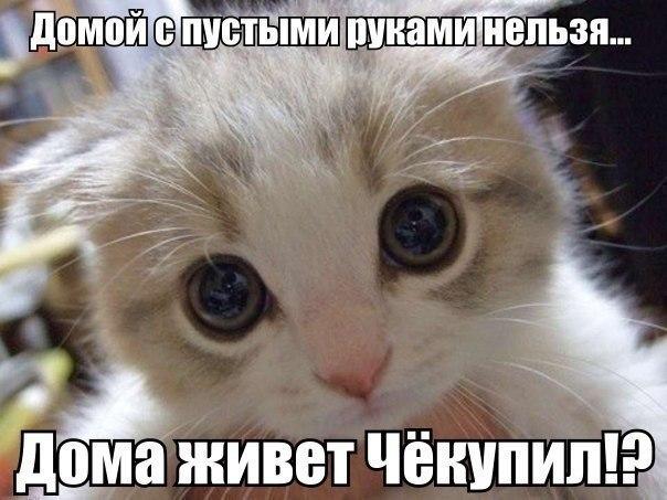 Картинки животных котят