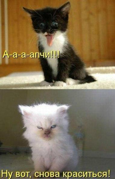 картинки смешных котят с надписями про интернет