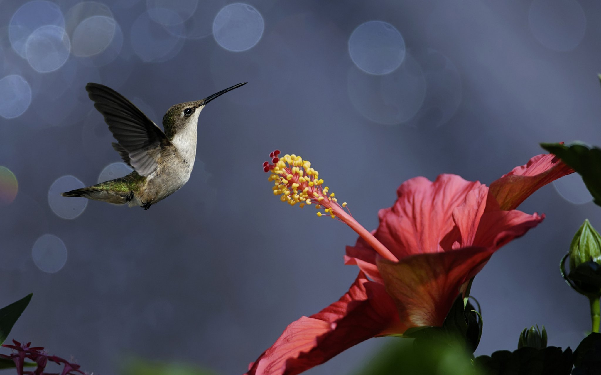 колибри самая маленькая птица