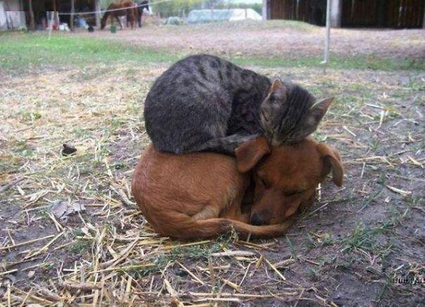 кот и собака друзья