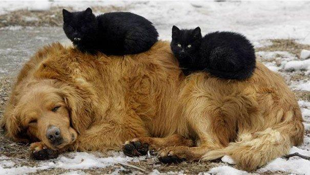 котята и собака друзья