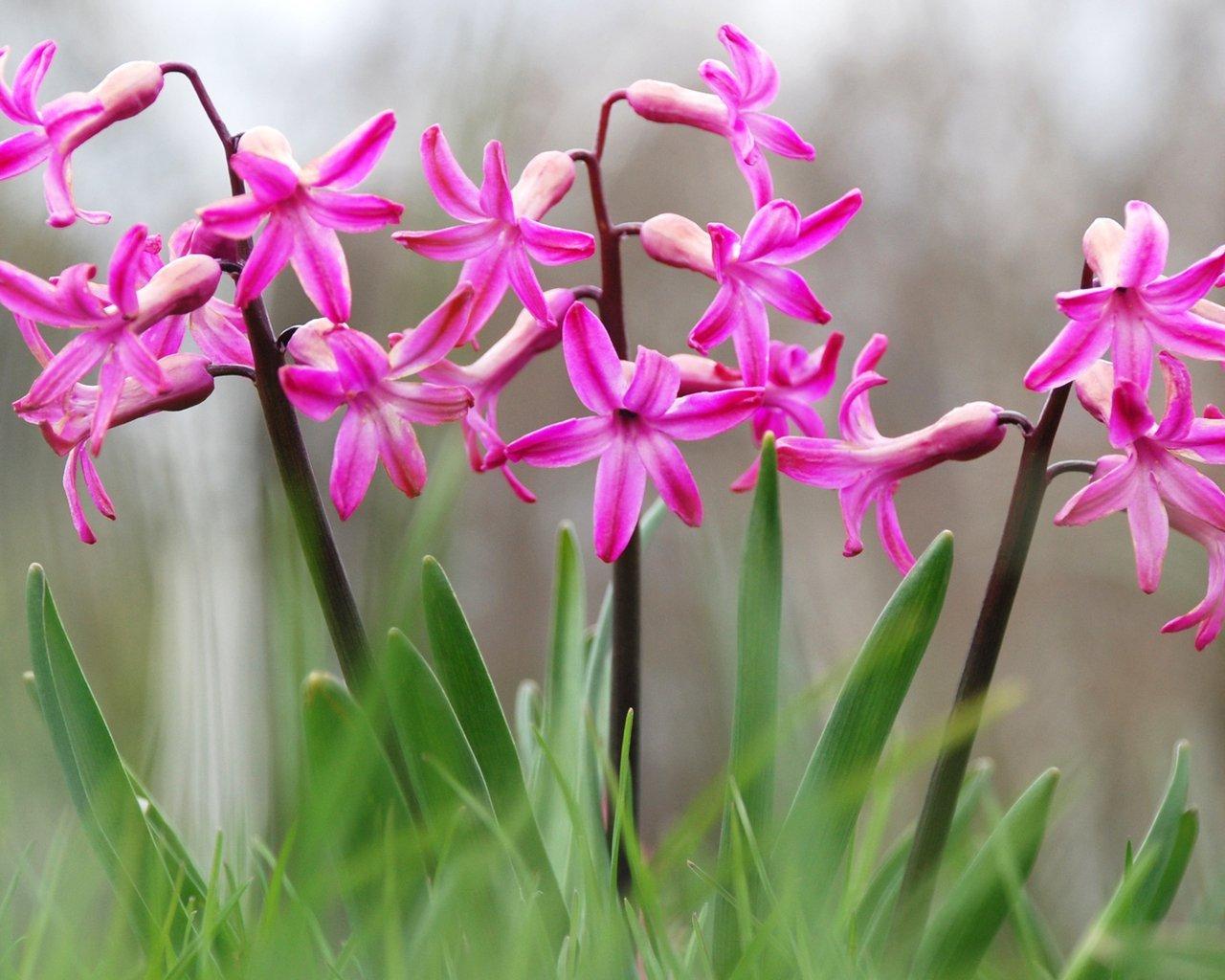 яркие и нежные цветы