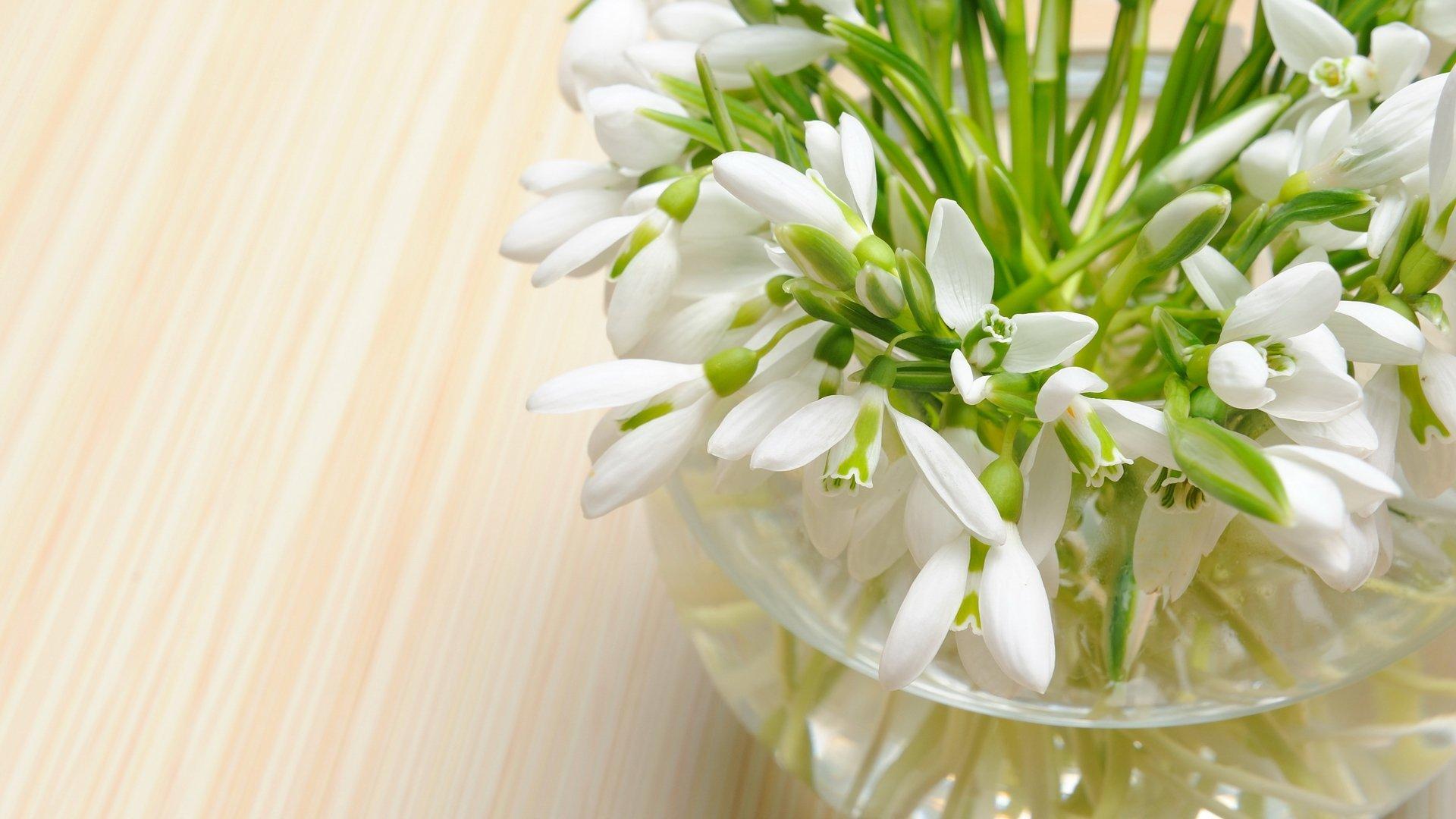 подснежник, нежные цветы