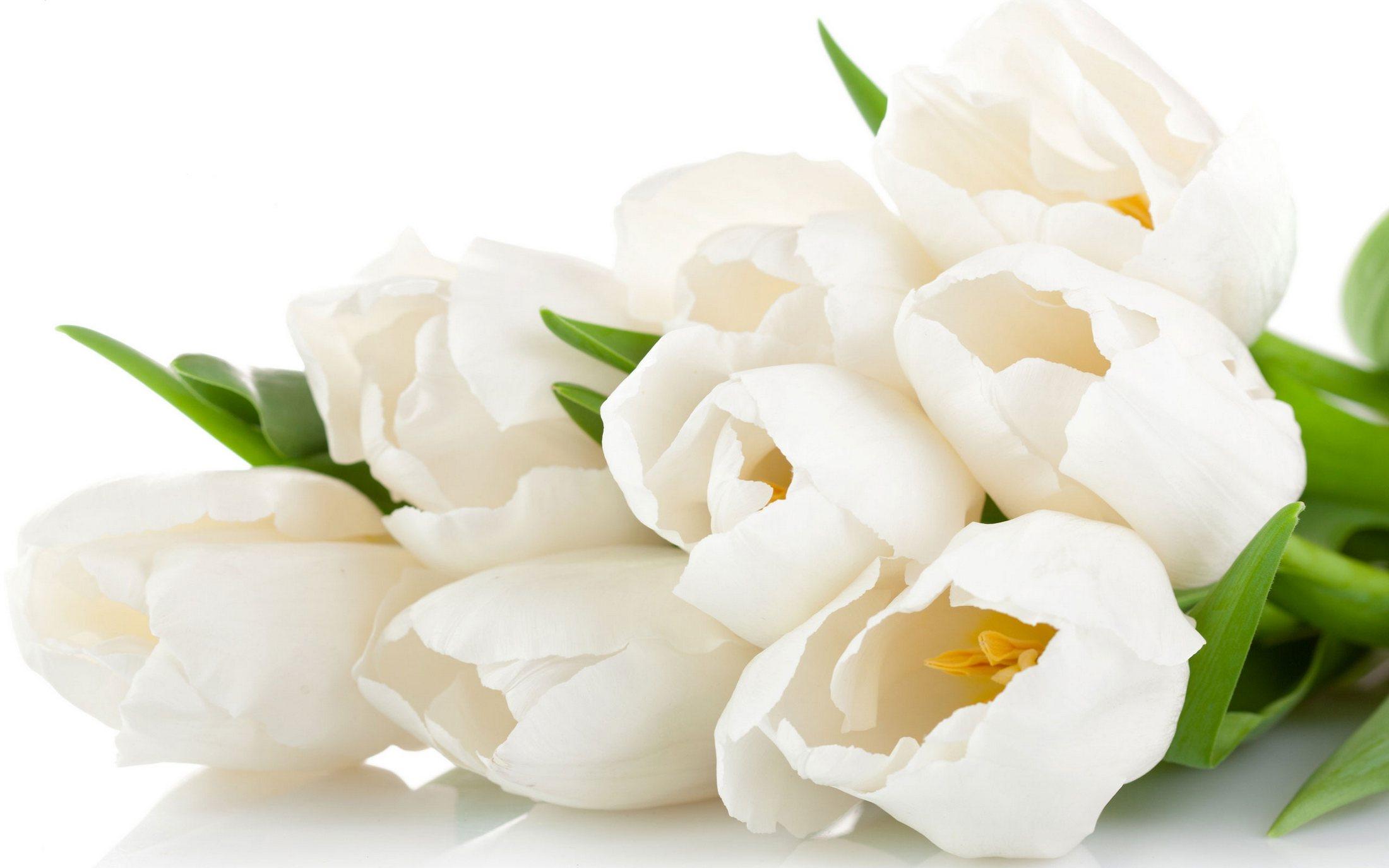 тюльпаны нежные цветы