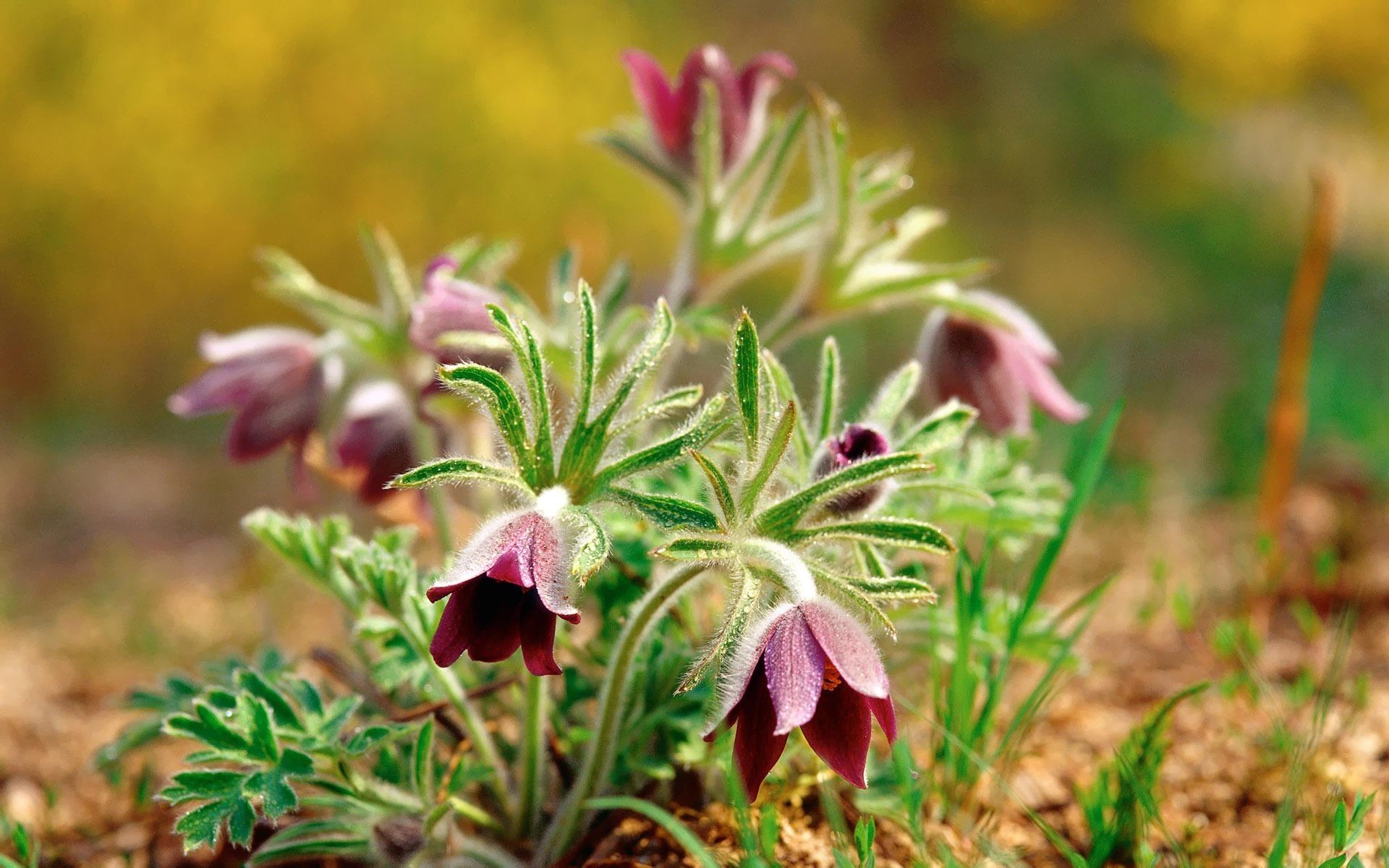 весенние нежные цветы