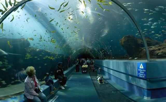 аквариум-тоннель Анталии, Турция отдых недорого