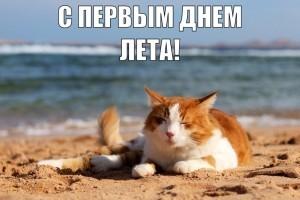 Смешные коты, фото