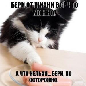 смешной кот, фото