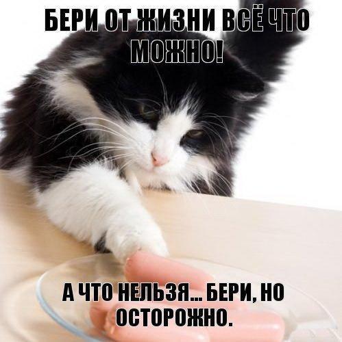 Фото кот очень смешной