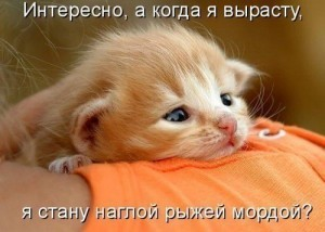 красивые котята, фото