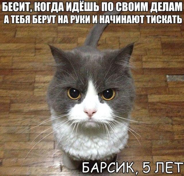 Самые смешные коты в картинках