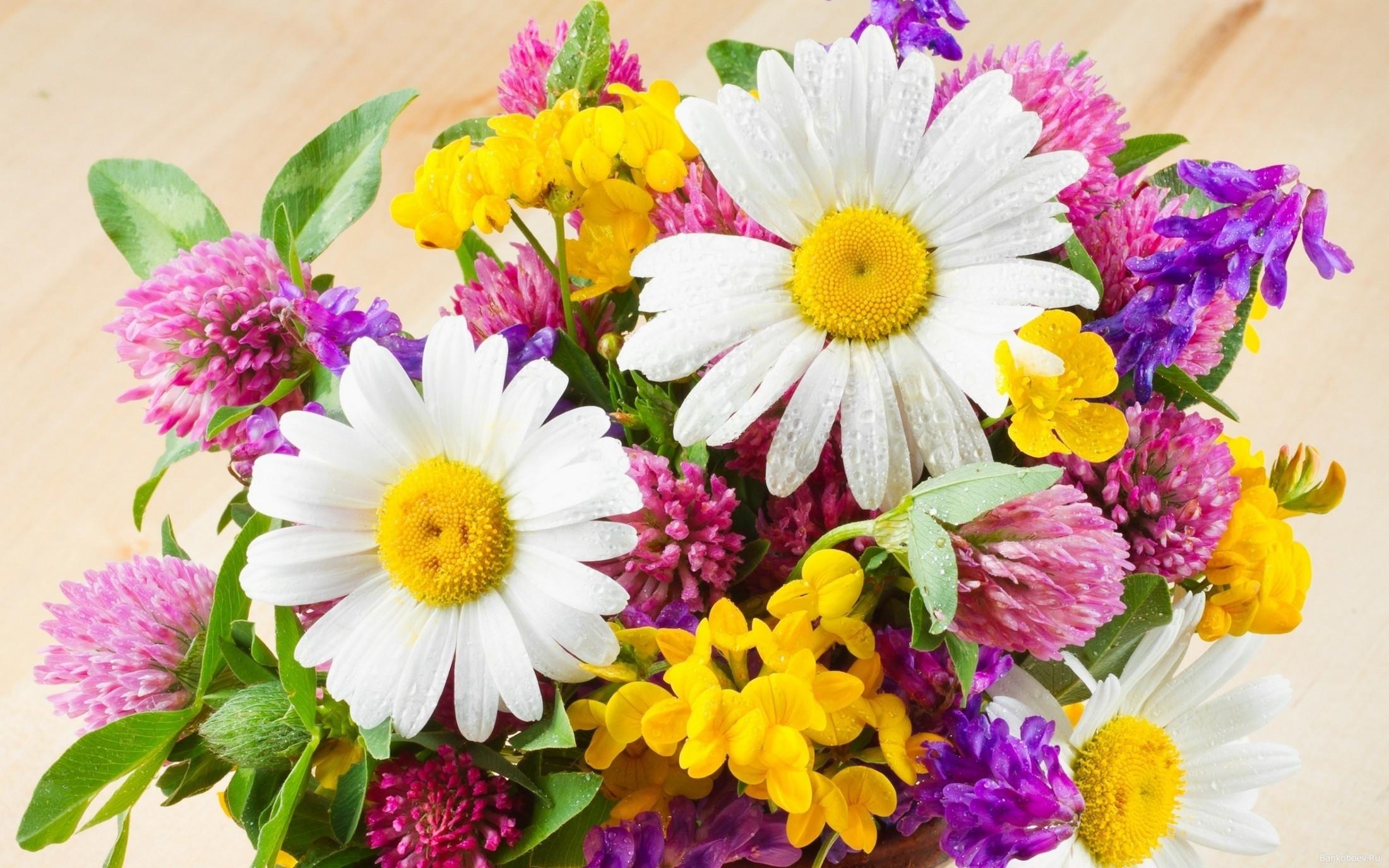 Букет цветов ромашек полевых #5