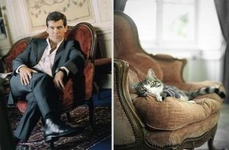 Коты как мужчины