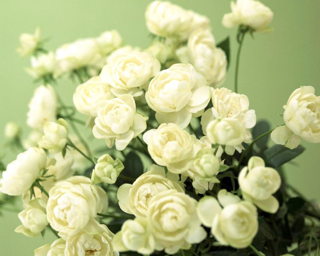 букет белых роз картинки
