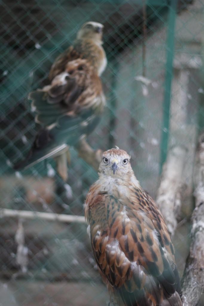 зоопарк Евпатория