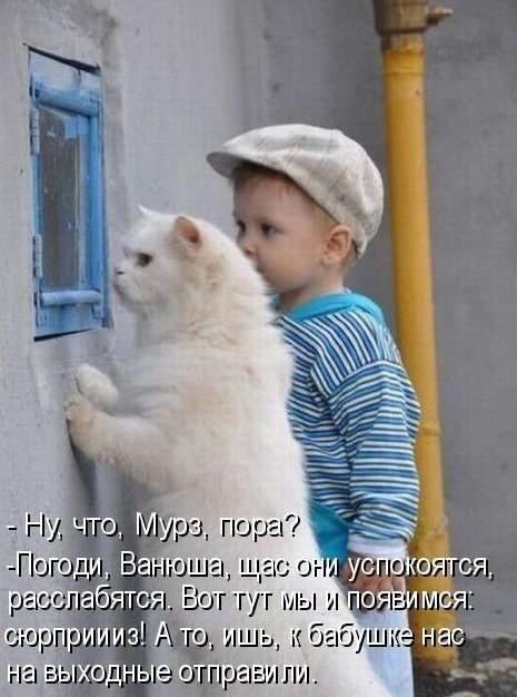 прикольные фото кошек и котов