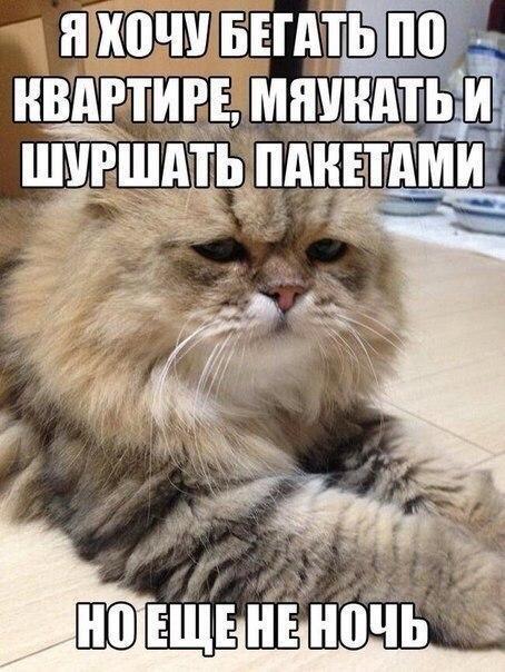 смешные фото котят