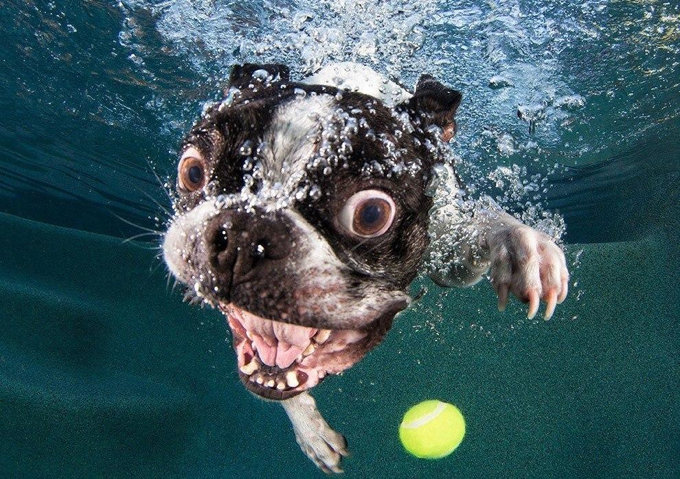 собаки и водные процедуры