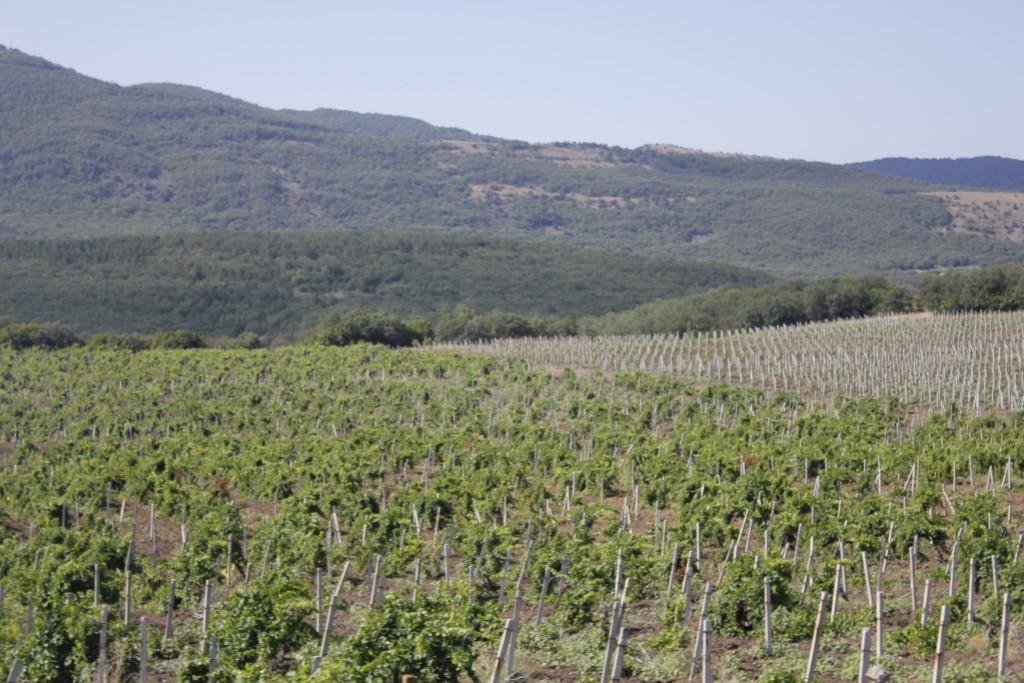 виноградники Крым