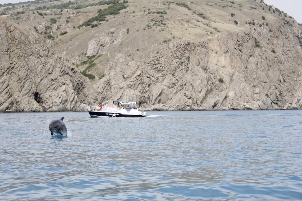 балаклава достопримечательности дельфины